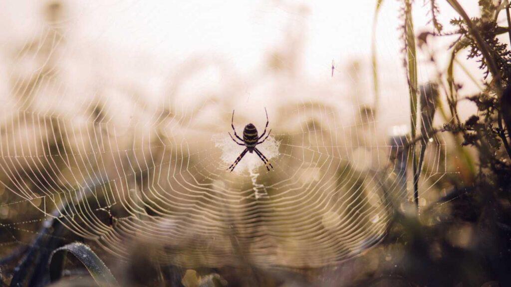 Spider Control Abu Dhabi
